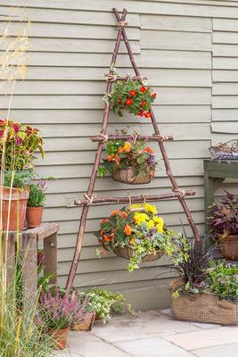Fri Mar 26 Houseplant or Flower Ladder 10am or 7pm